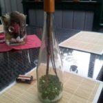 Irrlicht in einer Flasche